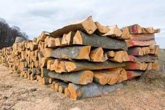 Seção dos logs da lenha da faia fotos de stock