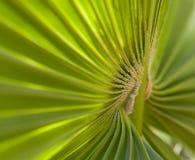 Seção em folha de palmeira Imagens de Stock Royalty Free