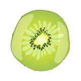 Seção redonda de um fruto de quivi suculento fresco verde tropical isolado no branco, ilustração do vetor Fotografia de Stock Royalty Free