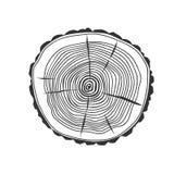 Seção transversal da árvore ilustração royalty free