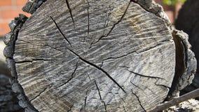 Seção transversal da árvore com casca grossa Imagens de Stock