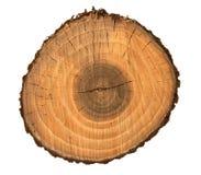 Seção transversal de madeira da fatia imagens de stock royalty free
