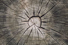 Seção transversal de madeira do tronco com separações madeira e círculos concêntricos dos anéis imagens de stock royalty free