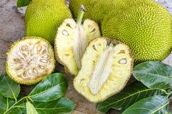 Seção transversal do Jack-fruto gigante Imagens de Stock