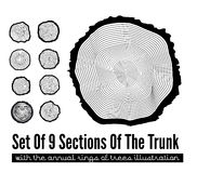 Seção transversal do tronco Fotografia de Stock