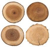 Seção transversal do tronco de árvore isolado no branco fotos de stock royalty free