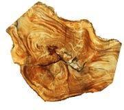Seção transversal do tronco de árvore que mostra anéis de crescimento no fundo branco Fotos de Stock Royalty Free