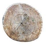 Seção transversal rachado resistido velho do tronco de árvore Imagens de Stock Royalty Free
