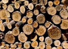 Seções transversais do troncos Foto de Stock Royalty Free