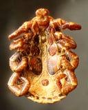 Señal bajo el microscopio Imagen de archivo libre de regalías