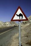 Señal de peligro del camino para los camellos en dubai Imagen de archivo