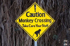 Señal de peligro - monos que cruzan el camino y que toman cuidado de su materia Fotos de archivo libres de regalías