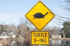 Señal de tráfico amarilla sobre tortugas Fotos de archivo libres de regalías
