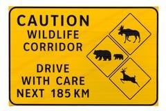 Señal de tráfico del pasillo de la fauna de la precaución Foto de archivo