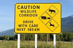 Señal de tráfico del pasillo de la fauna de la precaución Imágenes de archivo libres de regalías