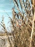 Señal de tráfico de una bici en un campo de maíz un día claro fotografía de archivo libre de regalías