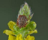 Señal en la flor Fotografía de archivo libre de regalías