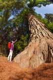 Señalar a la muchacha cerca de árbol grande en la secoya California Foto de archivo libre de regalías
