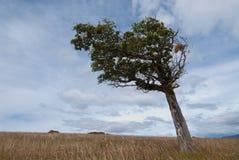 Señale el árbol por medio de una bandera formado por el viento en patagonia Fotos de archivo