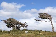 Señale los árboles por medio de una bandera en Tierra del Fuego, Patagonia, la Argentina Fotos de archivo