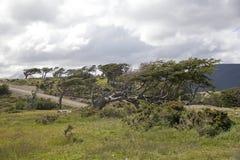 Señale los árboles por medio de una bandera en Tierra del Fuego, Patagonia, la Argentina Fotografía de archivo