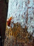 Señora Bug imagen de archivo libre de regalías