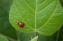 Señora Bug Imagenes de archivo