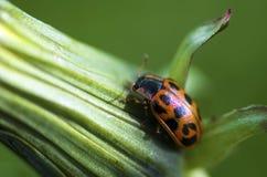 Señora Bug de la subida Imagenes de archivo