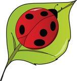 Señora Bug del LadyBug en una hoja ilustración del vector