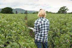 Señora Clutching una tableta que mira sobre una plantación imagenes de archivo