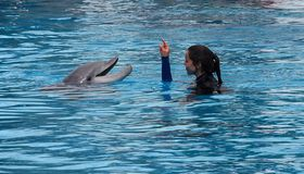 Señora Communicating With Dolphin imagen de archivo