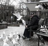 Señora con las gaviotas Fotografía de archivo