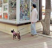Señora con un pequeño perro cerca de la cabina de la calle Imagen de archivo libre de regalías