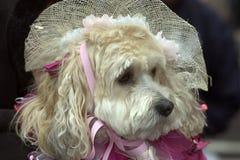 Señora Dog fotos de archivo
