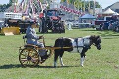 Señora en cochecillo con el caballo miniatura en el país justo Fotografía de archivo
