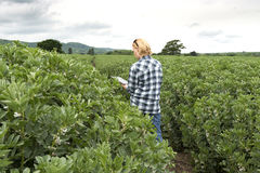 Señora en la plantación al aire libre que echa un vistazo en la pantalla de tableta imagen de archivo