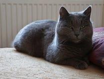 Señora-gato Fotografía de archivo