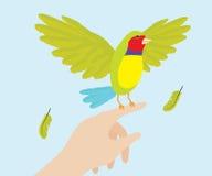 Señora Gouldian Finch Bird On Hand Fotos de archivo
