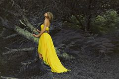 Señora hermosa en bosque de hadas Imagen de archivo libre de regalías