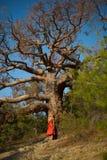 Señora hermosa y árbol poderoso fotografía de archivo