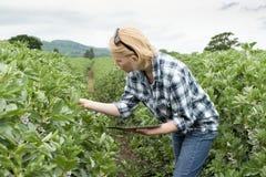 Señora Inspects una plantación mientras que sostiene una tableta fotografía de archivo libre de regalías
