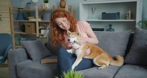Señora joven alegre que frota ligeramente el perrito hermoso del inu del shiba en el sofá en plano almacen de video