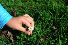 Señora joven que escoge una flor fotografía de archivo libre de regalías