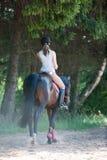 Señora joven que monta un caballo en la escuela ecuestre Proceso del entrenamiento Fotografía de archivo libre de regalías