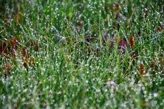 señora joven verde con las gotas de la lluvia que brillan en el sol Foto de archivo libre de regalías