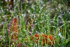 señora joven verde con las gotas de la lluvia que brillan en el sol Imagen de archivo libre de regalías