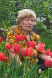 Señora mayor con los tulipanes Foto de archivo