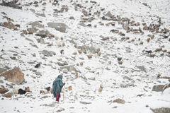 Señora mayor y animales que pastan en áreas de las altas montañas de Karakoram foto de archivo libre de regalías