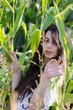 Señora morena asombrosa con el pelo rizado largo, entre campo de maíz Imagen de archivo