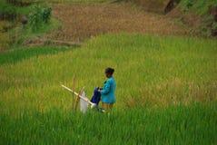 Señora que hace el lavadero en el campo Indonesia del arroz Foto de archivo
